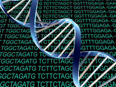The newly discovered seventh and eighth bases of DNA -- called 5-formylcytosine and 5 carboxylcytosine -- are actually versions of cytosine that have been modified by Tet proteins, molecular entities thought to play a role in DNA demethylation and stem cell reprogramming.