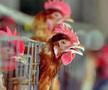深圳禽流感死亡病例病毒基因测序