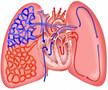 """""""长征路上""""第四届中国肺循环与血栓栓塞性疾病年会"""