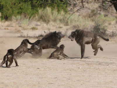 Science:为什么雄性哺乳动物会杀死本物种的幼婴
