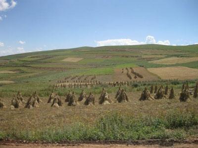 Science: 人类需要有大麦才能到达世界屋脊