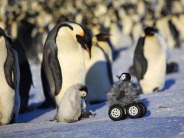 远程遥控车对野生生物干扰小于人类