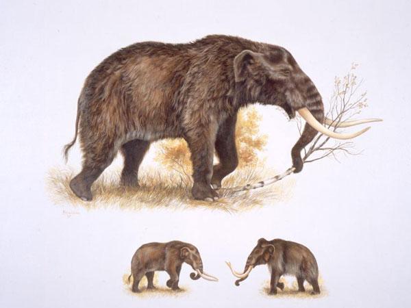 乳齿象在北极地区的消失
