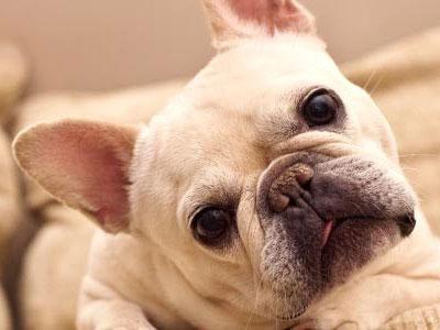 研究表明狗确实能听懂人说话