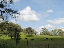 现有森林保护方案或只是将碳转移到非森林地区?