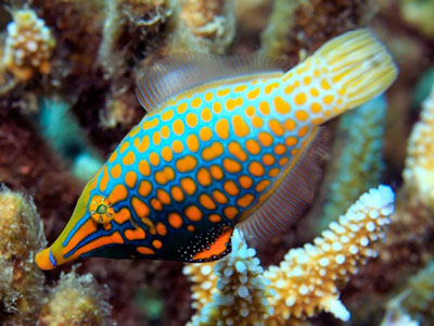 小鱼伪装靠气味儿