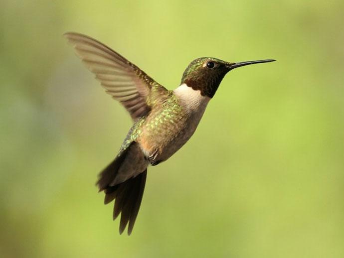 徐星等在《科学》发表有关鸟类起源研究综述