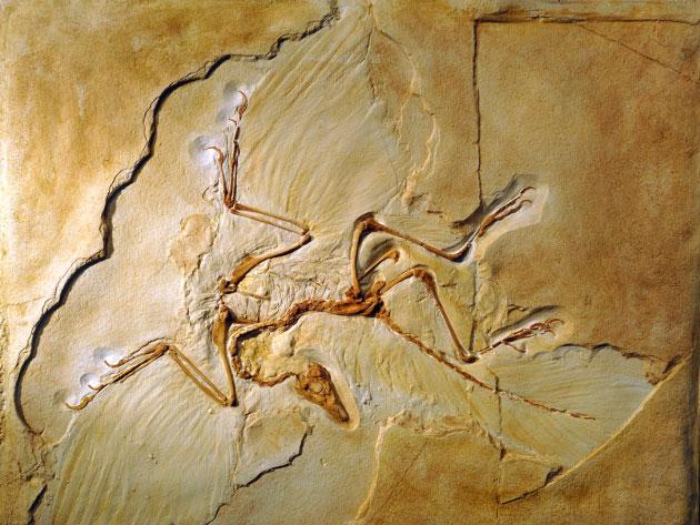 Nature:岌岌可危的始祖鸟