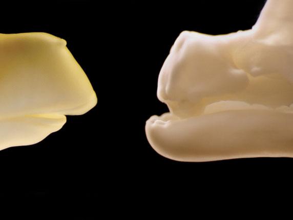 Science:鸟类如何失去牙齿?