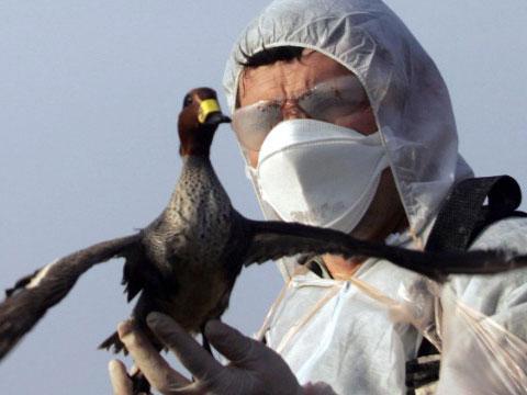 迁徙候鸟或助禽流感病毒传入欧洲