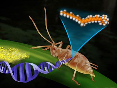 共生体对宿主生态的影响