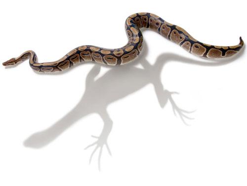 Nature:蛇的进化之谜