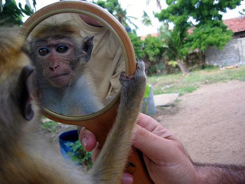 猴子也能学会照镜子