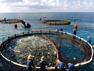 Science:中国水产养殖和世界野生渔业