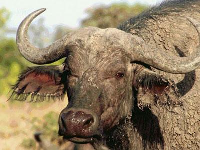 Science:要为野生动物驱除寄生虫吗?Science:要为野生动物驱除寄生虫吗?