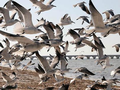 鸟类受精有玄机