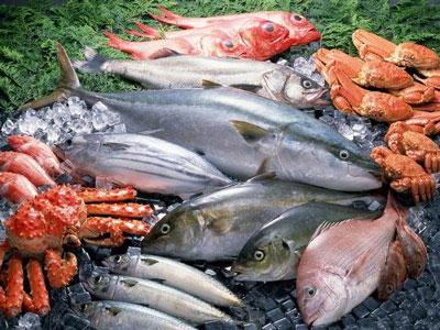 外来物种威胁日本鱼贝类
