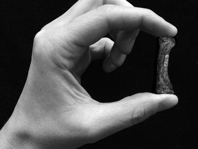 Science:人手或在300万年前展露雏形