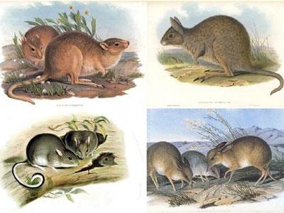 澳大利亚哺乳动物的灭绝压力