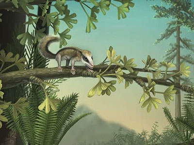Science:中国发现地球上最早的树栖和地穴哺乳动物化石