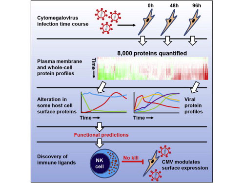 Cell:蛋白质组学牛人发布病毒研究新工具