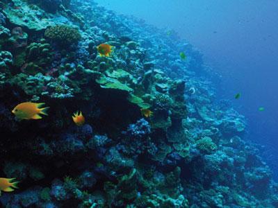 PNAS:与珊瑚有关的微生物群的宏基因组学
