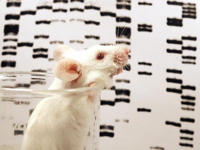 小鼠至人类基因组比较解释了DNA的演化