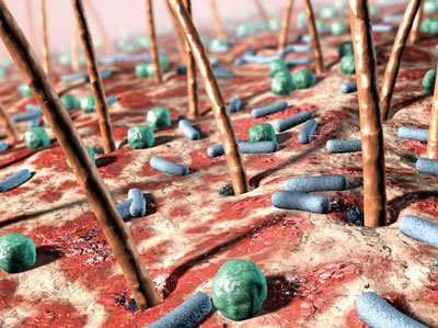 Nature:皮肤微生物组能够显著影响机体免疫力