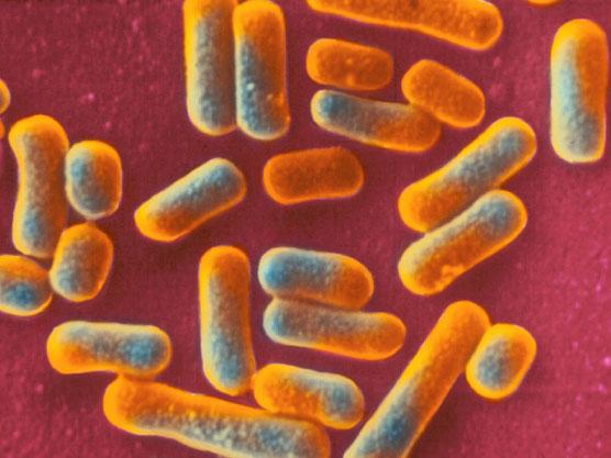 """Cell:人体微生物也是""""制药公司"""""""