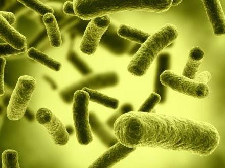 细胞快照可加速抗生素测试