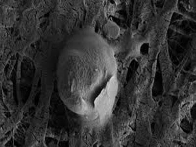 新发现深海微生物 连接起生命起源