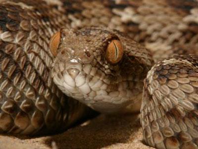 广谱蛇咬伤解毒剂面临的挑战