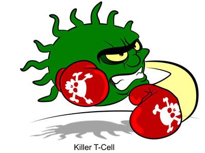 """免疫细胞有个""""隐形斗篷"""""""