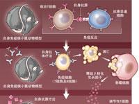 Science:重建机体的免疫耐受机制
