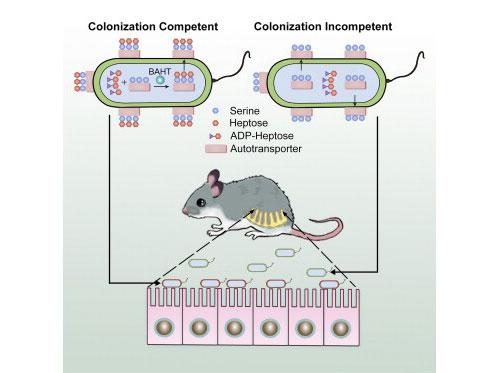 NIBS邵峰解析感染免疫重要发现