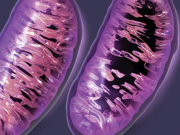 线粒体DNA突变与母亲年龄