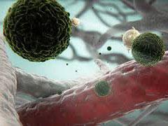 研究人员发现登革热病毒新抗体