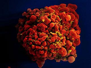 Science:激活单一免疫武装可能致死