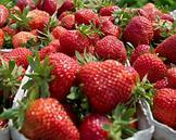 肥胖和胰岛素抵抗可能与身体产生的果糖相关