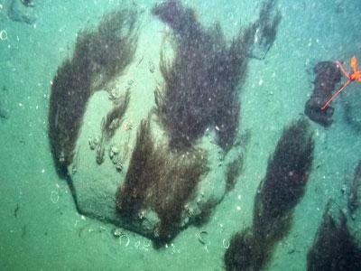 北极峡湾深处惊现居民