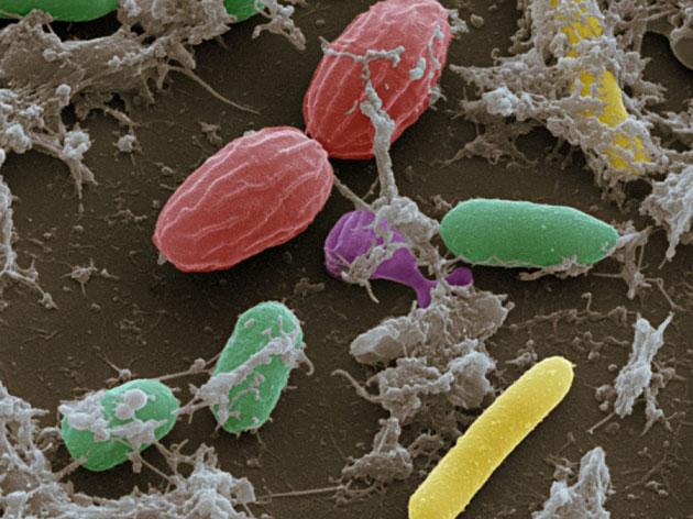 Nature:风险!微生物组可能泄露个人隐私