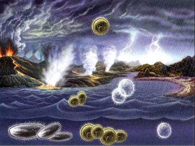 生命起源时的氨基酸疏水性
