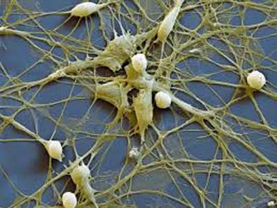 Nature:组蛋白H3.3沉默内源性逆转录病毒序列