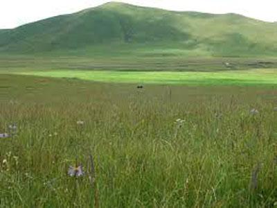 草原的生物多样性流失