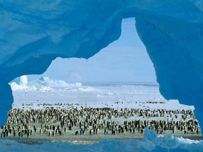 Nature:南极生物多样性及其保护