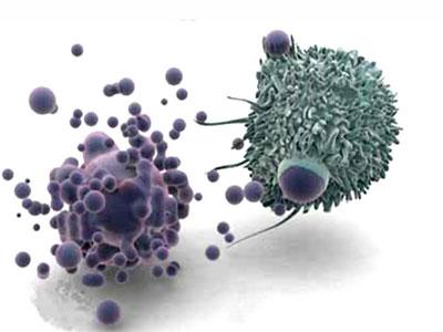 研究发现酸环境中识别凋亡细胞的受体