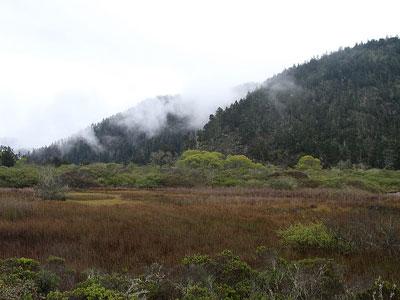 大盆地生态系统能量动态
