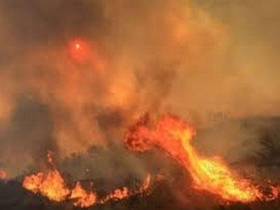 全球野火活动在加剧
