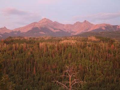 干旱遗留给树木的影响值得建模