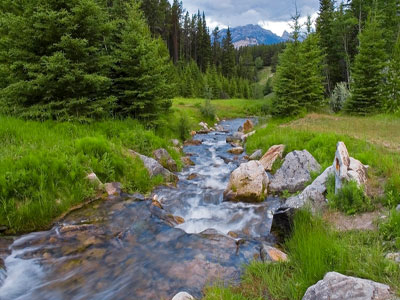 追踪溪流的人为污染